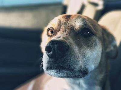 Reistaler für Hunde backen