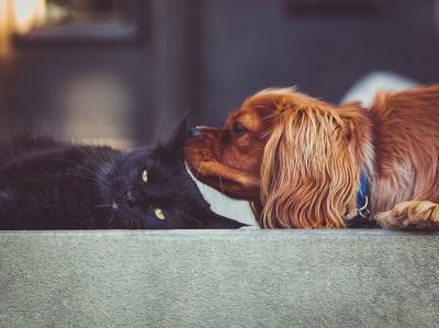 Leckerchen für Hund und Katze